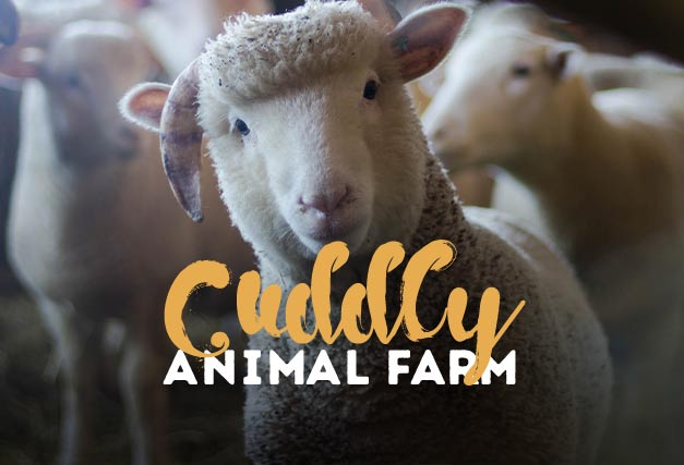 Cuddly Animal Farm <br> At The Hen