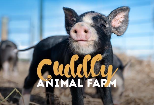 Cuddly Animal Farm <br> At The Hen